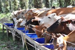 SSMS Group Dukung Swasembada Daging Nasional dengan Langkah Ini....
