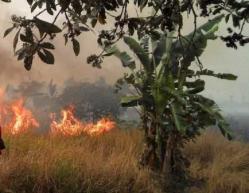 sebuah lahan yang cukup terbakar, karena tak ada petugas, biasanya warga memadamkan sendiri dengan peralatan seadanya.