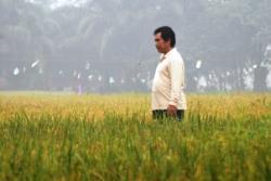 LAHAN PERTANIAN : Seorang petani memeriksa lahan pertanian dari hama yang menjadi kendala dalam panen di Barito Utara, belum lama ini. Meski kemarau panjang, masih ada beberapa kelompok tani yang sukses mengelola lahan pertanian mereka.