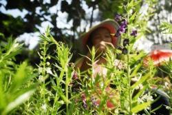 SIAPKAN LIMA POHON: Pasangan calon pengantin yang akan melaksanakan pernikahan diwajibkan untuk menanam lima pohon. Kebijakan ini dilontarkan oleh Menteri Lingkungan Hidup dan Kehutanan Republik Indonesia.