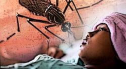 Ilustrasi: Demam Berdarah Dengue (DBD). Dinas Kesehatan Kotawaringin Barat belum menemukan kasus DBD tahun ini, tetapi masyarakat tetap diminta waspada.