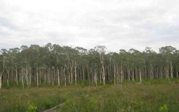 Taman Nasional Tanjung Puting di Kecamatan Hanau, Seruyan. Foto: Tajungputing.blogspot.com