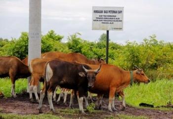 Ternak Berkeliaran, Pemilik Acuhkan Keluhan Pengguna Jalan