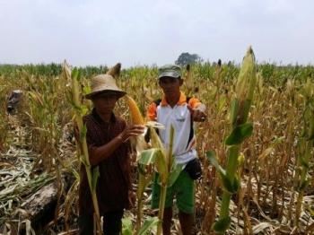 Distanak Terus Genjot Inventarisasi Lahan Pertanian  Tanaman Pangan Terus Digenjot