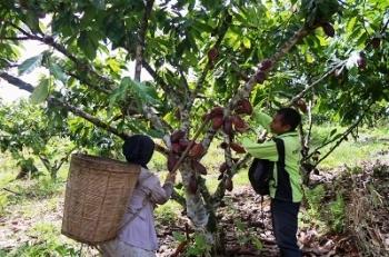 Murung Raya Dorong Masyarakat Kembangkan Perkebunan agar Dongkrak Perekonomian