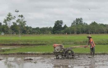 Warga Rasau Tumbuh Usulkan Cetak 60 Hektare Sawah Baru