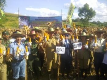 Sasaran Tanaman Padi Barut 1.200 Hektare