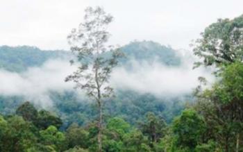 Pemerintah pusat resmi mengalihfungsikan hutan di Pulau Kalimantan seluas 2,2 juta hektare. BORNEONEWS/ROZIKIN
