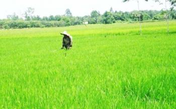 Sebanyak lima kecamatan di Barito Timur mendapatkan bantuan program cetak sawah. Bantuan cetak sawah itu berasal dari Kementerian Pertanian. BORNEONEWS/AMAR ISMANI