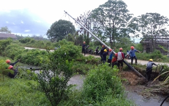 PT PLN Rayon Sukamara mulai mendirikan tiang listrik yang rubuh akibat diterpa hujan, beberapa waktu lalu. BORNEONEWS/NORHASANAH