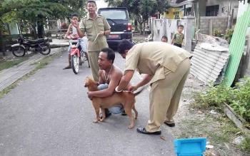 Petugas Distanak melakukan suntik rabies untuk Anjing. DOK BORNEONEWS