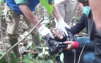 Proses evakuasi di TKP Dusun Tuanan. BORNEONEWS/BUDI YULIANTO
