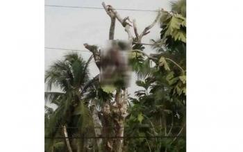 Karno, warga RT 8, Pangkalan Lima, Kecamatan Arut Selatan (Arsel), tewas setelah tersengat listrik saat menebang pohon. BORNEONEWS/FAHRUDDIN FITRIYA