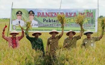 Bupati Kotawaringin Timur, Supian Hadi dalam sebuah kegiatan panen raya. Bupati Kotim berkomitmen memperhatikan nasib petani lokal, antara lain dengan memperbaiki jaringan irigasi. BORNEONEWS/DOK