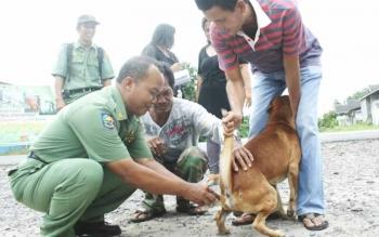 Sejumlah petugas Dinas Peternakan Kabupaten Kotawaringin Barat sedang menyuntik anjing peliharaan warga dengan vaksin antirabies. DOK BORNEONEWS