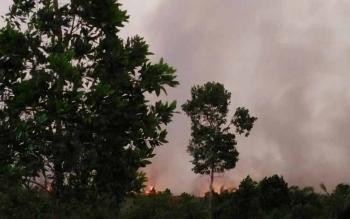 Lahan yang terbakar di Desa Sei Kapitan kecamatan Kumai menyebabkan asap pekat membumbung ke udara pada Rabu (24/8/2016). Hingga saat ini, api yang menghanguskan lahan gambut aeluas 20 hektare itu belum bisa dipadamkan sepenuhnya. BORNEONEWS/CECEP HERDI
