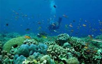 Takabonerate, Pulau Selayar. TRIBUNNEWS