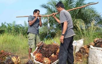 Petani Kelapa Sawit di Seruyan Tunggu Hasil Kerja Sama Pemkab-Yayasan INOBU Terkait Penjualan Hasil Panen
