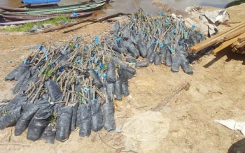 Ratusan bibit karet dalam polybag, yang diberikan oleh Dishutbun Barito Utara kepada Desa Karendan terbengkalai. BORNEONEWS/RAMADANI