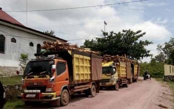 Tampak Sejumlah Truk bermuatan kayu akasia terparkir di Mapolres Lamandau Jumat (30/9/2016), setelah diamankan Satreskrim pada Rabu (28/9/2016) malam lalu. BORNEONEWS/HENDI NURFALAH