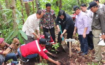 Gubernur Sugianto dan Menteri LHK Siti Nurbaya Bakar saat menanam pohon di Hutan Gambut Jumpun Pambelum. BORNEONEWS/ROZIKIN