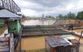 Pembudidaya ikan di bantaran Sungai Arut saat ini memasuki masa suram kejadian matinya puluhan ton ikan pembudidaya pada tahun 2014-2015 dan 2016 memukul bisnis perikanan masyarakat. BORNEONEWS/KOKO SULISTYO