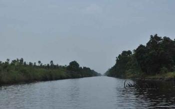 Kawasan hutan Sebangau di sepanjang DAS Sebangau Kabupaten Pulang Pisau, Kalimantan Tengah. Memasuki musim hujan, orangutan tak lagi memasuki kawasan permukiman warga. BORNEONEWS/JAMES DONNY