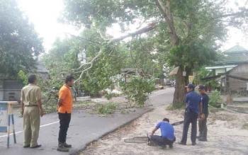 Pohon tumbang di beberapa jalan protokol di Pangkalan Bun akibat musibah badai angin kencang. BORNEONEWS/CECEP HERDI