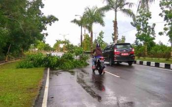 Pengendara berhenti akibat pohon yang tumbang dan menutup sebagian badan jalan saat badai hujan melanda Sukamara, Jumat (14/10/2016) BORNEONEWS/NORHASANAH