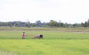 Petani sedang bekerja di sawah. Anggota Komisi II DPRD Kotawaringin Timur Roy Lumban Gaol mengatakan, bantuan pertanian, harus diberikan secara merata. BORNEONEWS/DOK