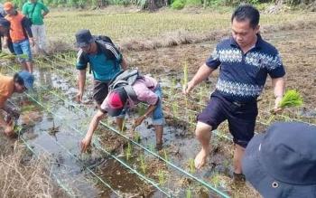 Kepala Dinas Pertanian dan Perkebunan Kabupaten Gunung Mas Letus Guntur (tiga dari kiri) menaman padi bersama petani untuk musim tanam Oktober-Maret. BORNEO/EPRA SENTOSA