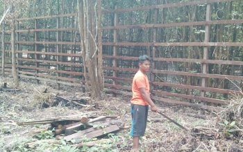 Hutan kota yang nantinya akan dijadikan lokasi penangkaran rusa.(Gandhi)