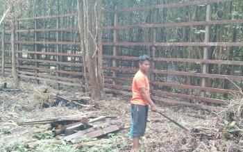 Hutan kota yang nantinya akan dijadikan lokasi penangkaran rusa.BORNEONEWS/GANDHI NUSWANTARA