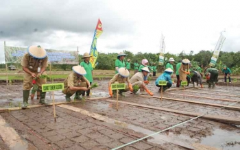 Distankannak Barito Utara Serahkan Bantuan 29.150 Kg Bibit Padi
