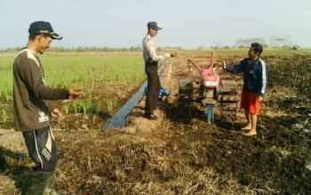 Bhabinkamtibmas Bripka Teguh Wahyudi, saat mengerjakan lahan pertanian bersama warga di Desa Teluk Pulai, Kecamatan Kumai. BORNEONEWS/FAHRUDDIN FITRIYA