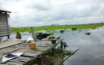Salah satu lahan pertanian Kampung Sambas Kelurahan Padang Kabupaten Sukamara terendam banjir. BORNEONEWS/NURHASANAH