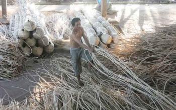 Seorang pekerja membersihkan, dan mengeringkan rotan. Musim hujan membuat petani rotan di Kotawaringin Timur kesulitan memanen rotan, dan karet. BORNEONEWS/M. HAMIM