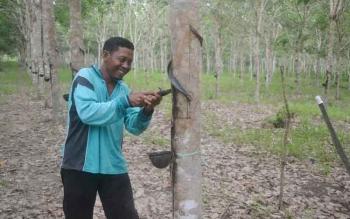 Salah satu petani karet Limau Kuit saat menadap karet di kebun miliknya di Desa Natai Sedawak. Para petani kini menikmati harga tinggi, Rp14 ribu per kilogram, sesuai kualitas produksi mereka. BORNEONEWS/NORHASANAH