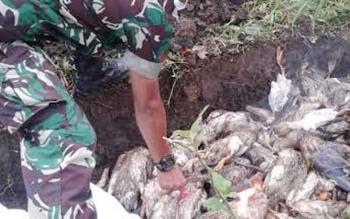 Pemusnahan unggas itik di Kecamatan Tamban Catur dan Kecamatan Basarang, Kabupaten Kapuas. BORNEONEWS/DJEMMY NAPOLEON