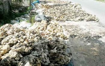 Getah karet milik Rahmadi di Jalan Soekarno-Hatta Kasongan hasil pembelian dari warga dijemur agar kering sebelum dijual ke pabrik.BORNEONEWS/ABDUL GOFUR