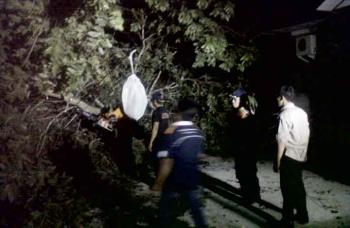 POHON ROBOH - Anggota Sat Damkar Kobar sedang bertugas menyingkirkan pohon roboh dan menimpa kabel lisrik didekat rumah warga Kompek Perumahan Tanjung Puting Jalan HM rafii sekitar bulan Oktober 2016 lalu.
