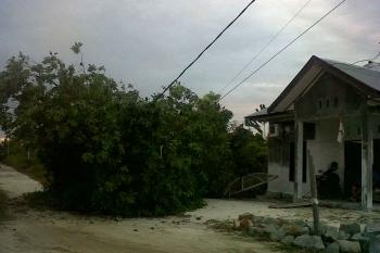 POHON ROBOH - sebuah pohon robioh dan menimpa kabel lisrik didekat rumah warga Kompek Perumahan tanjung Puting jalan HM rafii sekitar bulan Oktober 2016 lalu.