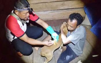 Petugas Distanak sedang memberikan VAR kepada anjing peliharaan warga di Desa Kerabu, Kecamatan Arut Utara. Tahun 2016 sebanyak 3899 vial VAR berhasil disuntikkan kepada anjing peliharaan warga.