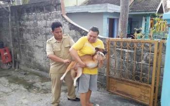 Petugas Distanak Kobar sedang memberikan VAR kepada anjing peliharaan warga di RT 23 Kelurahan Baru, sekitar Agustus 2016 lalu. BORNEONEWS/WAHYU KRIDA