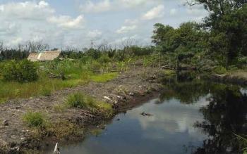 Warga Menduga Kemunculan Buaya Akibat normalisasi sungai Jayau. (BORNEONEWS/KOKO SULISTYO)