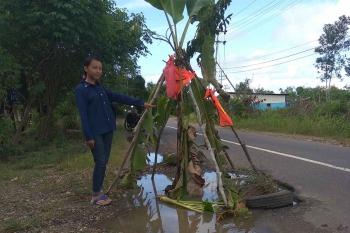 JALAN RUSAK : Seorang warga Ampah berdiri di dekat pohon pisang yang ditanam di jalan Tamiang Layang-Ampah, Sabtu (7/1/2017)