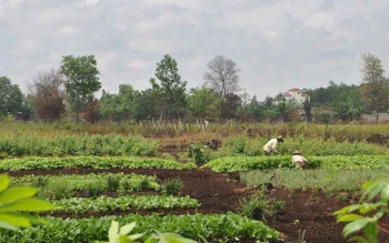 Dua petani di Sampit tengah merawat tanaman sayur-mayurnya. (BORNEONEWS/SAMPIT)