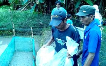 Petani Keramba Kesulitan Bibit Ikan Baung