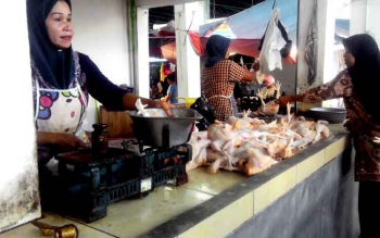 Agen ayam potong di Pasar Blok R Kuala Kapuas, Kabupaten Kapuas, Siti Arbaina. (BORNEO/DJIMMY NAPOLEON)