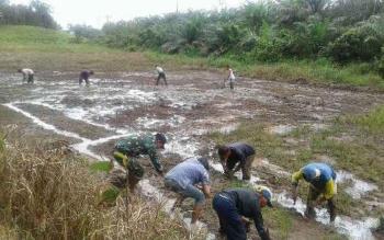 Anggota Koramil Beduai Dampingi Petani Bereng Berkawat Sanggau Tanam Padi